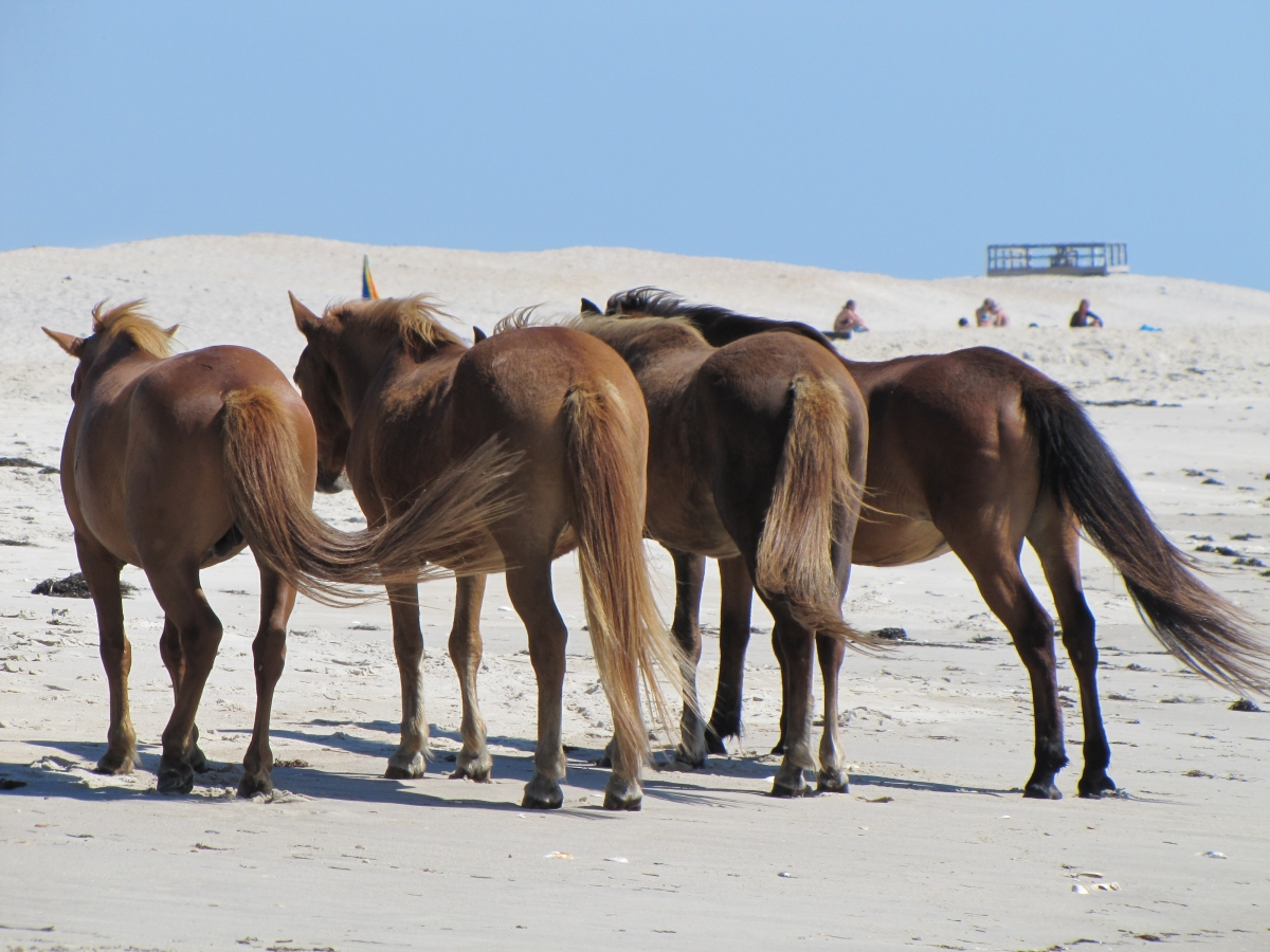 Assateague National Park, MD