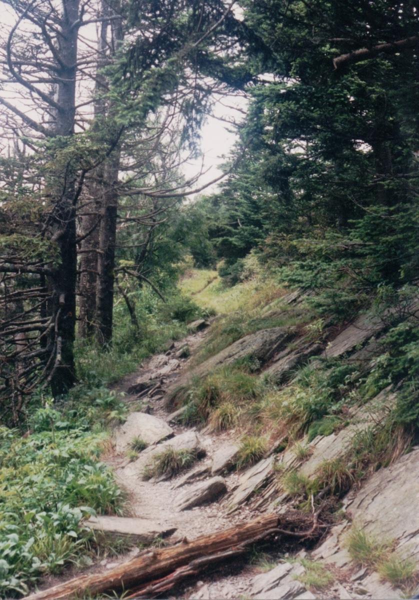 Appalachain Trail, Great Smoky Mountain National Park, TN